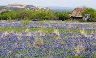 Doss Quiet Hill Ranch Bluebonnets