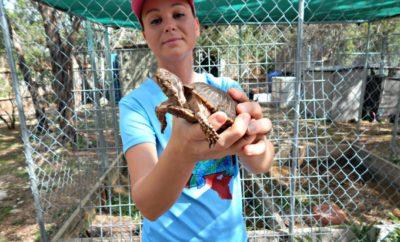 Rachel and blind tortoise