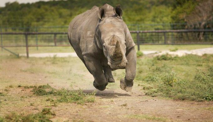 Rhino at Exotic Game Ranch