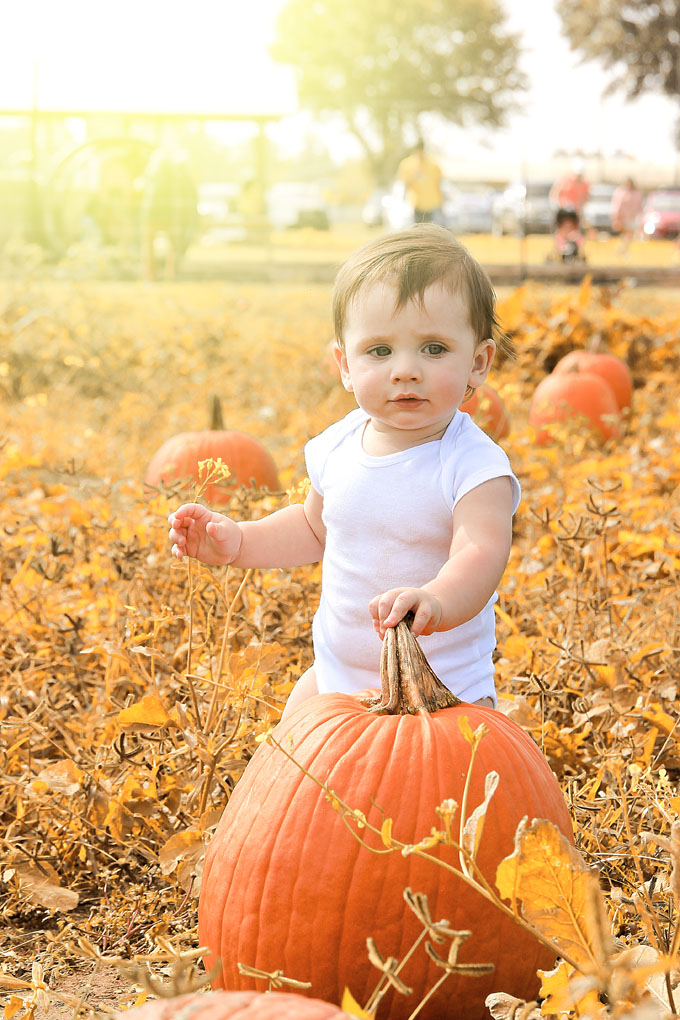 Plan a visit to a pumpkin patch