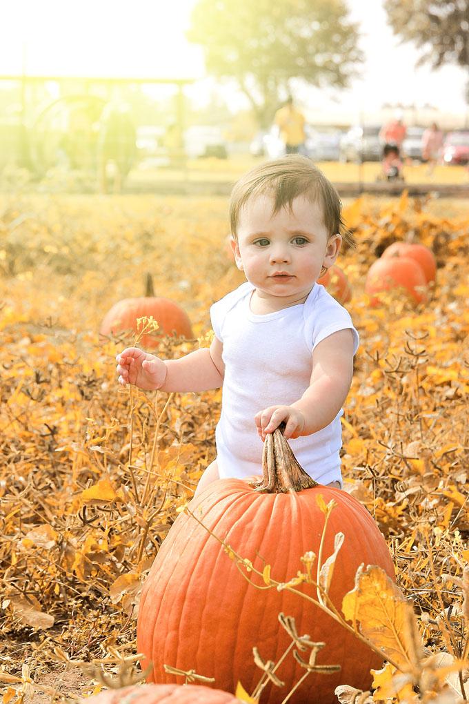 Plan a visit to a pumpkin patch