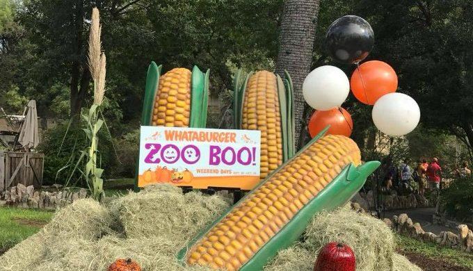 SA Zoo Boo