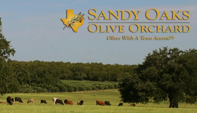 Sandy Oaks Olive Orchard is another of the many Texas olive growers