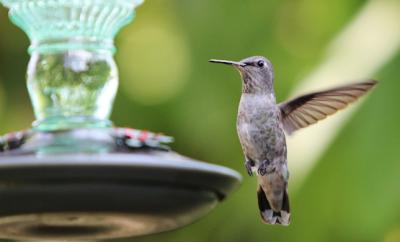East Texas Hummingbirds
