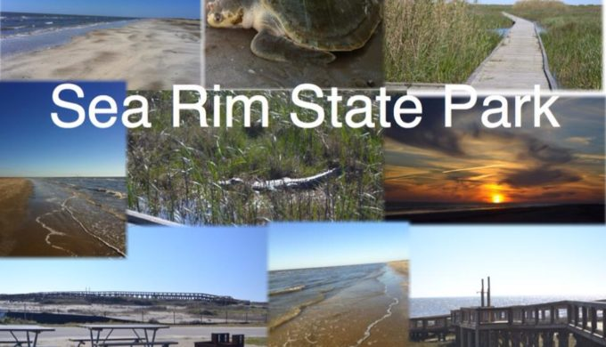 Sea Rim State Park is closed for early teal hunting