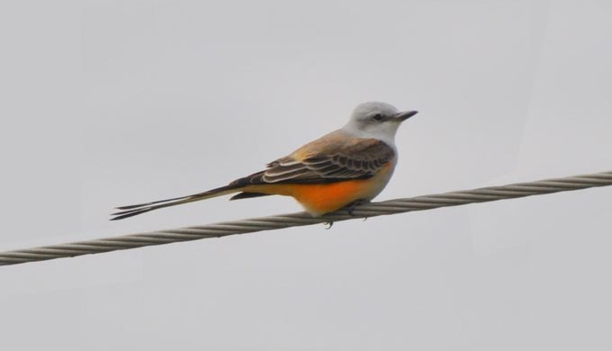 Secrets to Birding in the Hill Country