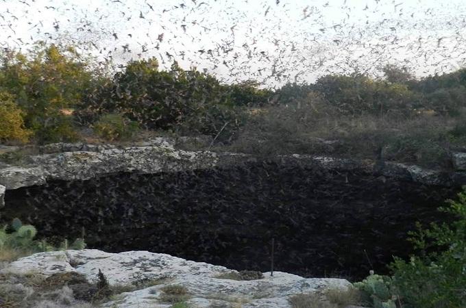 Bats taking flight out of Devil's Sinkhole