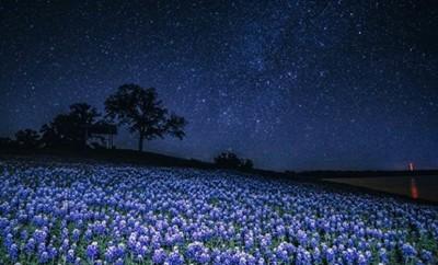 Stargazing by Brandon Mangan