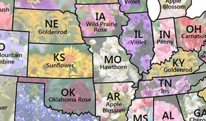 Map Shows Every US State Flower - Us state map
