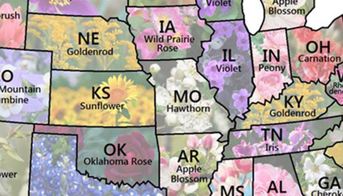 Map Shows Every U S State Flower