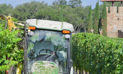 A Hot, Dry Summer Leads to Exciting Harvest Along Wine Road 290