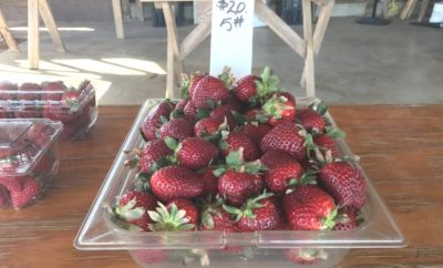 Marburger Orchard Strawberries