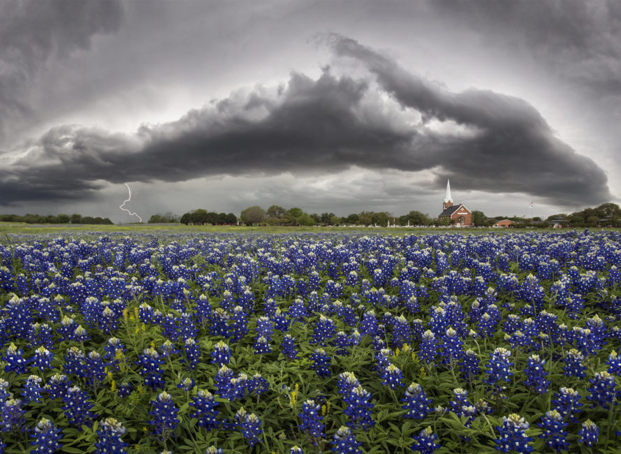 Bluebonnets at Palm Valley Lutheran in Round Rock, Tx.