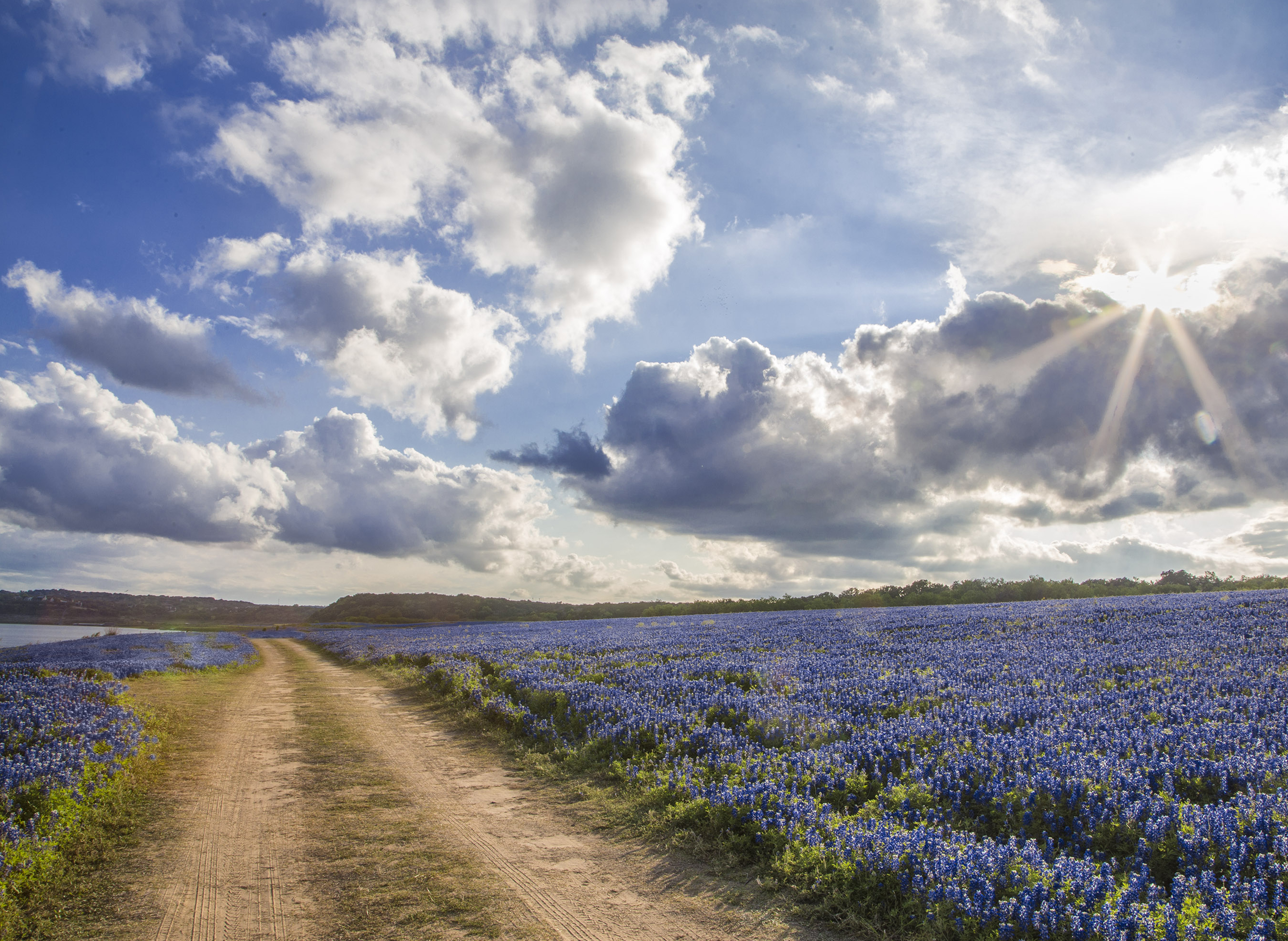 5 Hot Spots In The Hill Country To See Bluebonnets In 2018