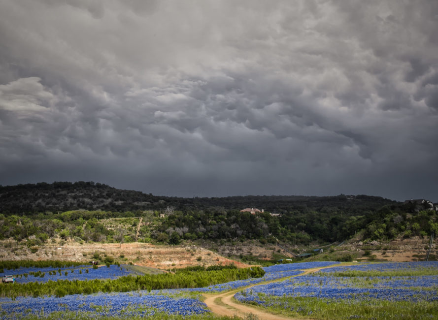 Wide angle image of the massive bluebonnet field at Muleshoe Bend.