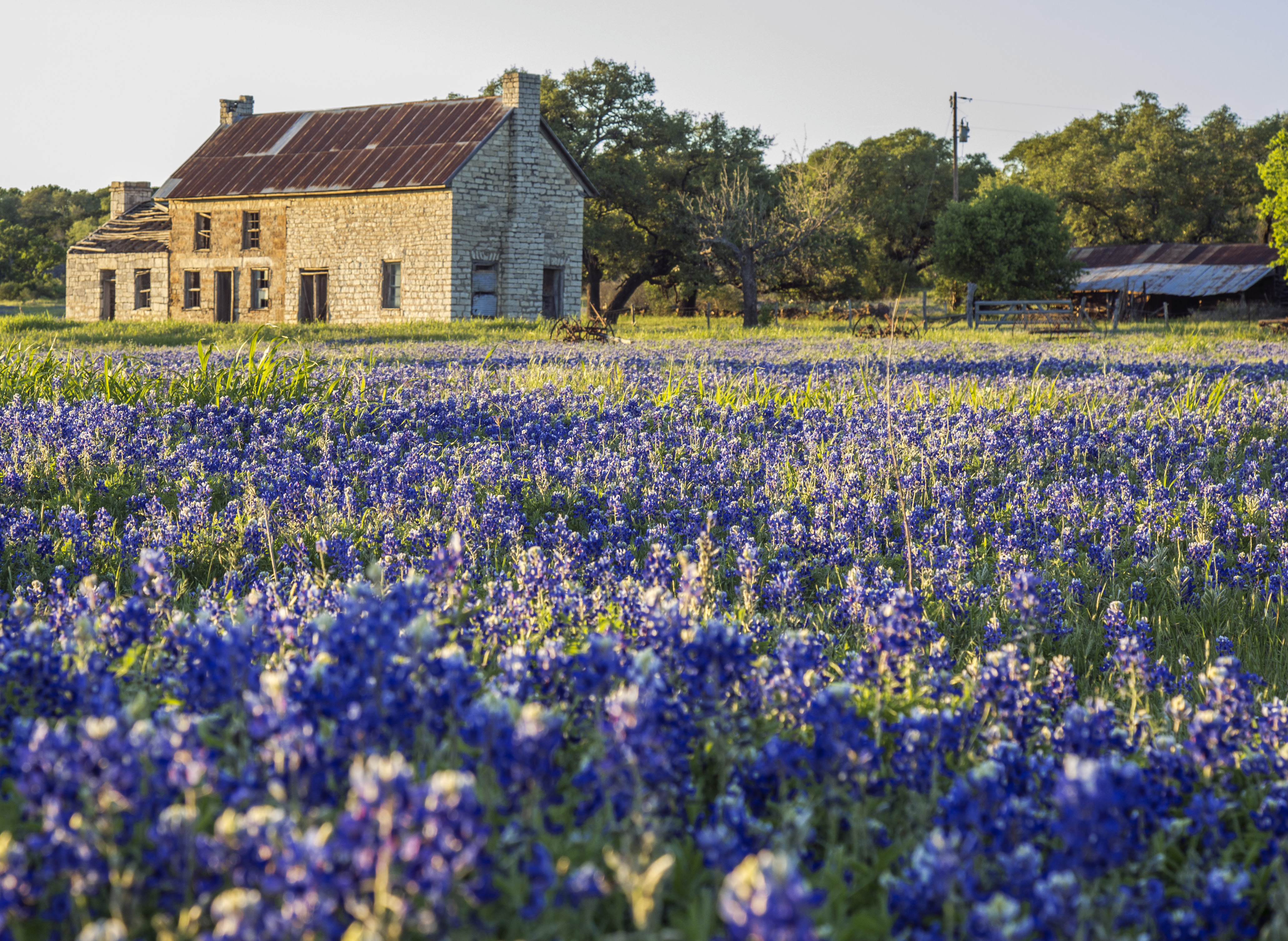 Bluebonnet Alert: Iconic Marble Falls Location Experiencing Best ...