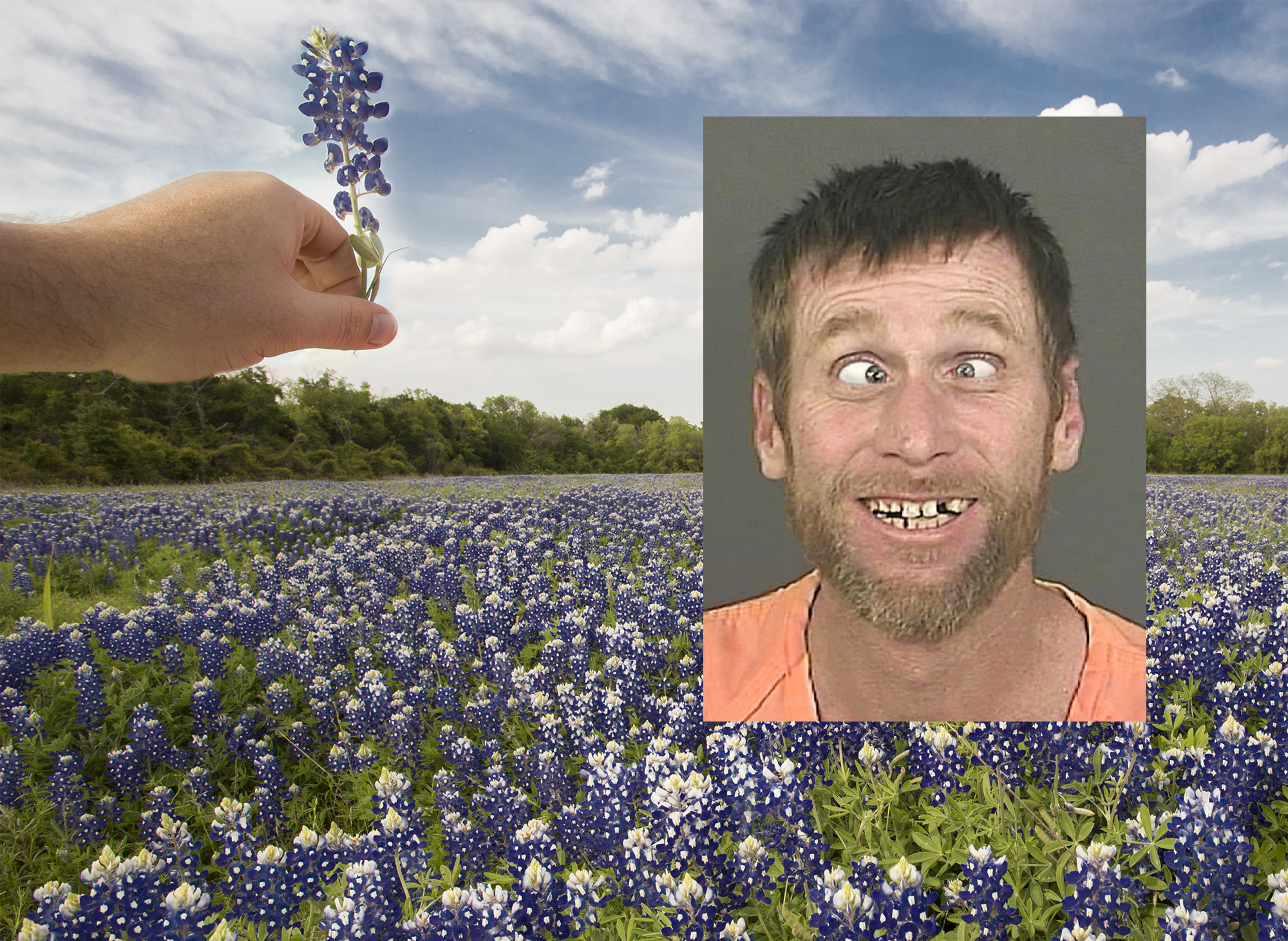 Texas Man Charged with Felony Herbicide for Picking Bluebonnets