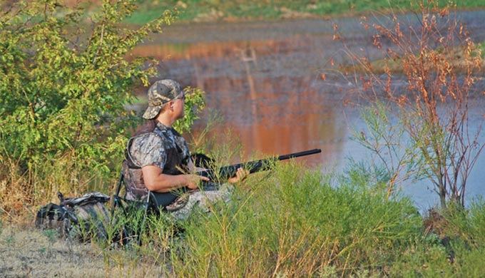 Secret to Dove Hunting in the Hill Country