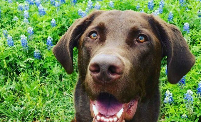 Dog Friendly Vacation Ideas In Texas