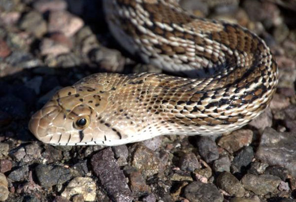 Can You Identify All of These Texas Snakes? [QUIZ]