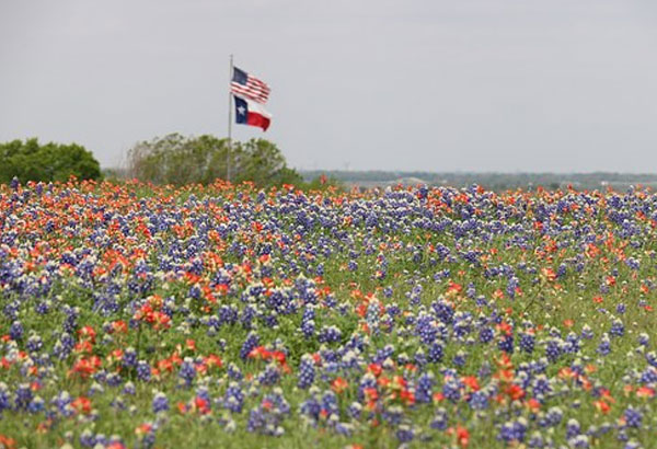 1. Texas has a state flower song. It's called: