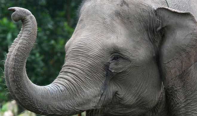 The Biggest Elephant Story in the Hill Country
