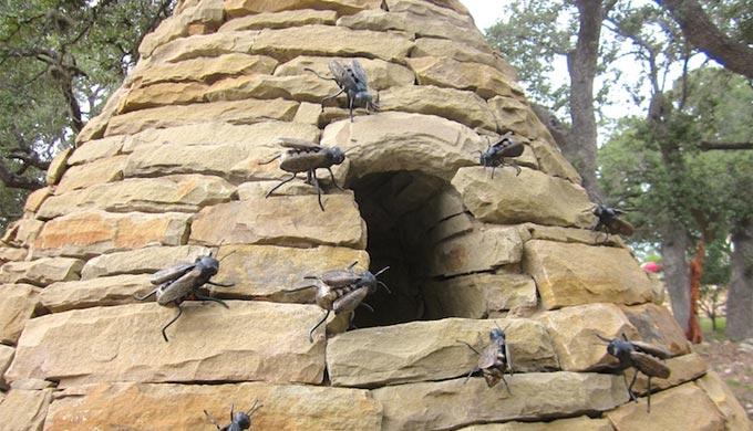 The Buzz Around Bee Cave