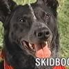 The Amazing Skidboot: The 'World's Smartest Dog' [VIDEO]