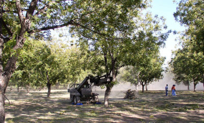 Tree shaker used in harvesting pecans