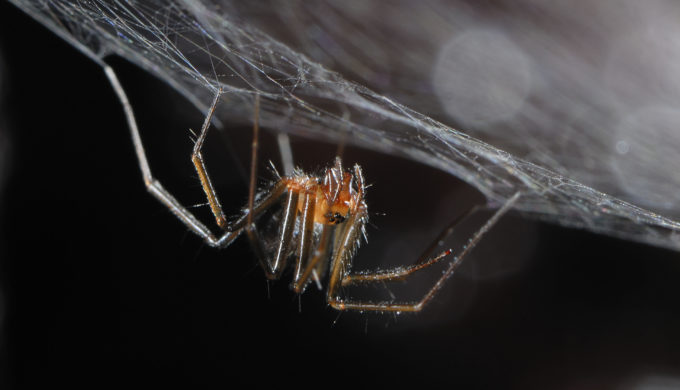 International Research Team Discovers New Species of Large Cave-Dwelling Spider in Mexico