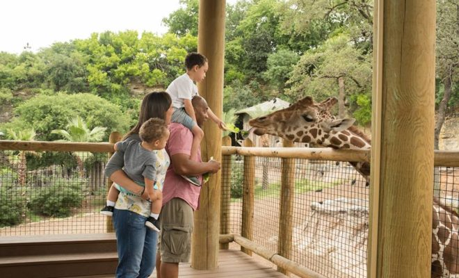 Visit San Antonio Zoo on Memorial Day