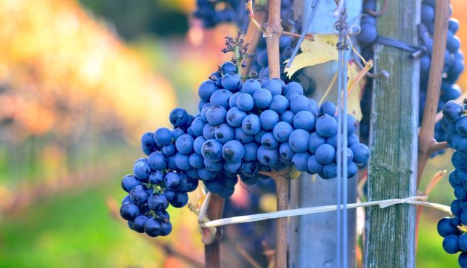 Heard Through the Grapevine: Texas Hill Country Wineries That Know a Thing or Two About Viticulture