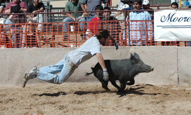 Wild Hog Explosion in Bandera