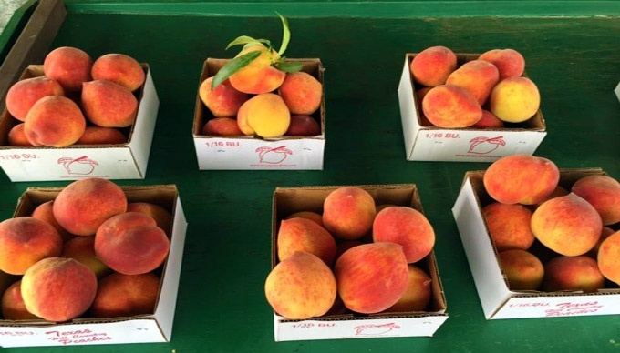 Where to Pick Your Own Texas Hill Country Peaches