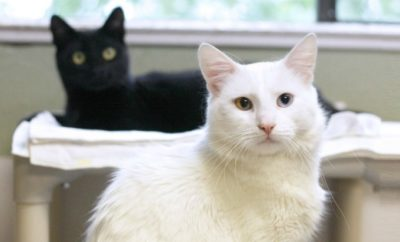 White cat Cats