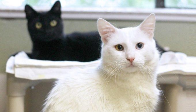 White cat Cats
