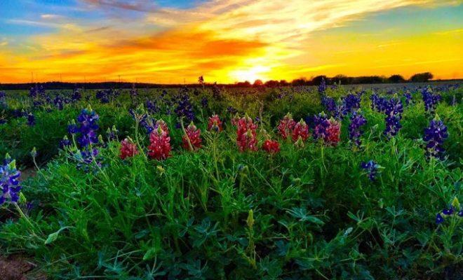 Wildseed Farms Fredericksburg Texas