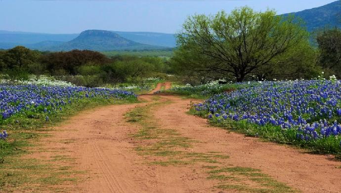 Bluebonnet Fever A Virtual Road Trip