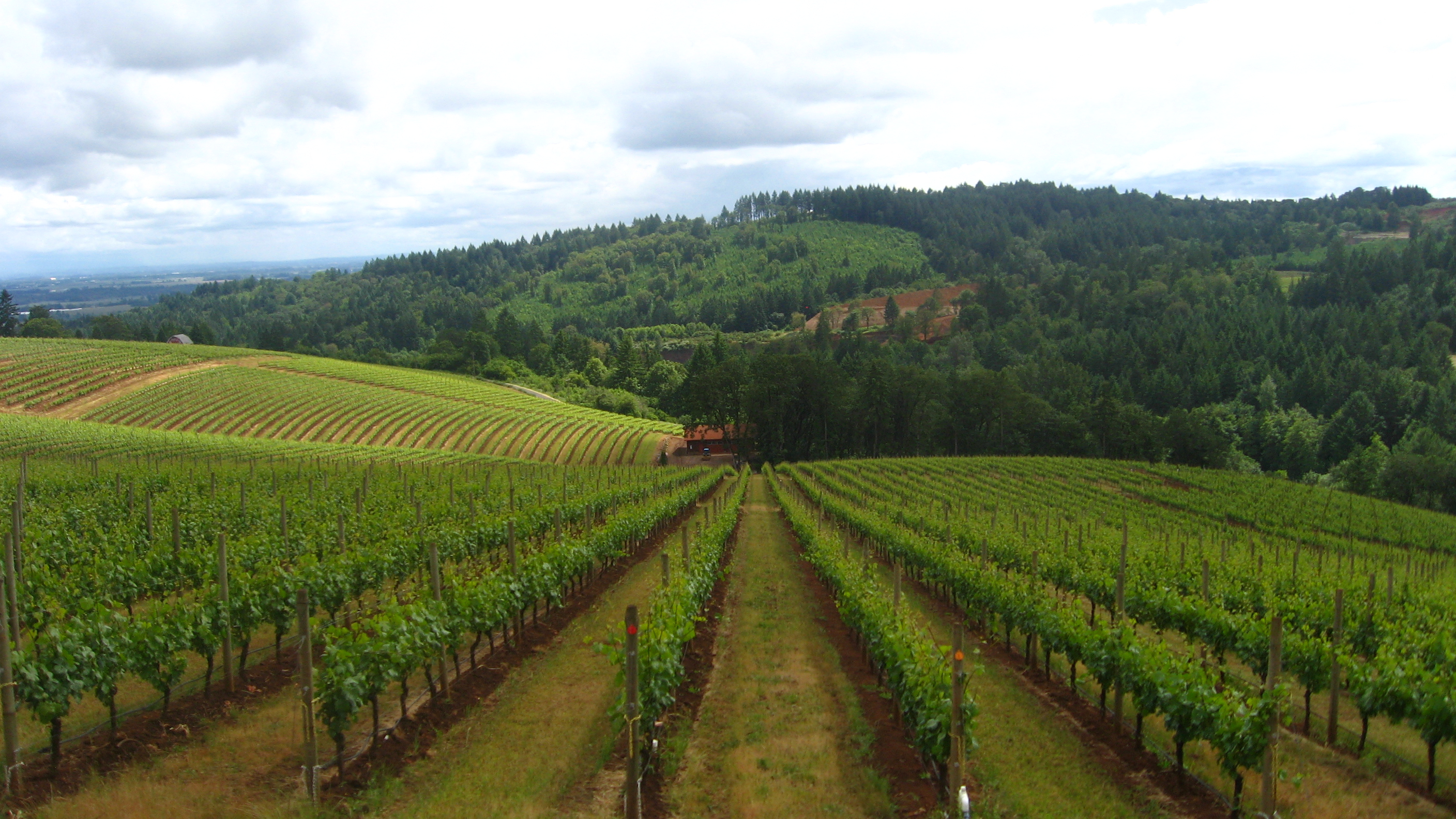 Texas Wine Country Tours