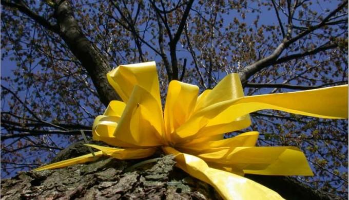 Yellow Ribbon Around Old Oak Tree