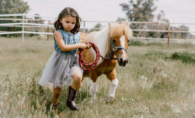 Miniature Horses Thrive in Buda Home Named Little America