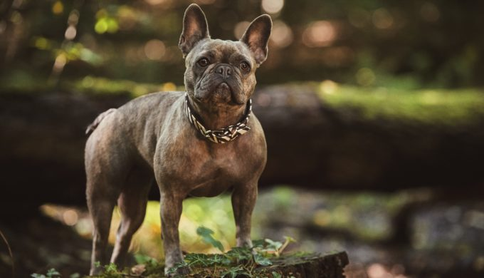 Dog Names Like Ripley