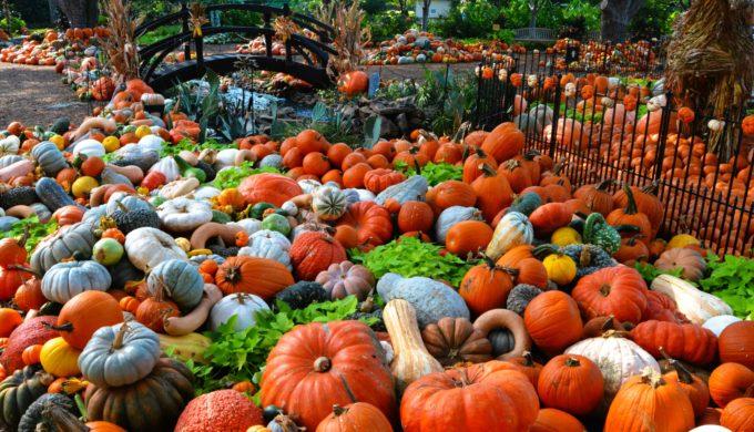 Meet Charlie Brown & Friends with Great Pumpkin Village at Arboretum