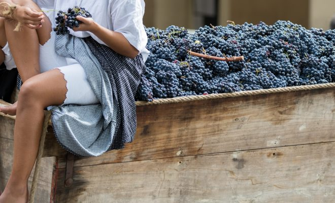 Quality Over Quantity for this Year's Texas Wine Harvest