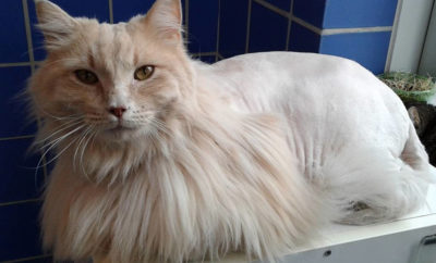 Austin Animal Center Breaks Record For Saving Animals