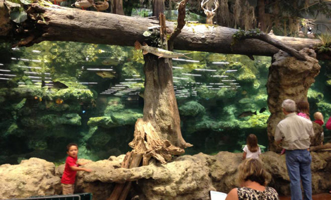 Teen Shows Off to Friends, Jumps Into Bass Pro Shop Fish Tank