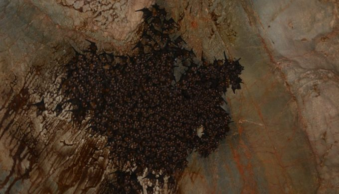 Blowout, Texas: When Bats Caused an Explosion and Named a Town