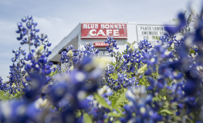 Take a Virtual Tour of the Bluebonnets in Beautiful Marble Falls
