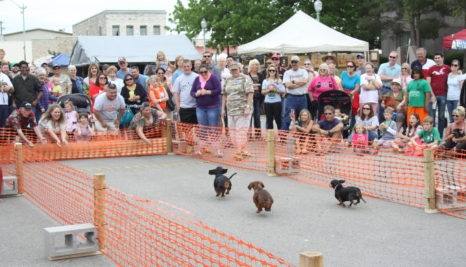 Burnet Bluebonnet Festival dog race