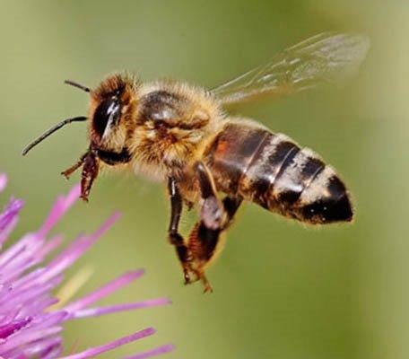 Bee Cave Texas